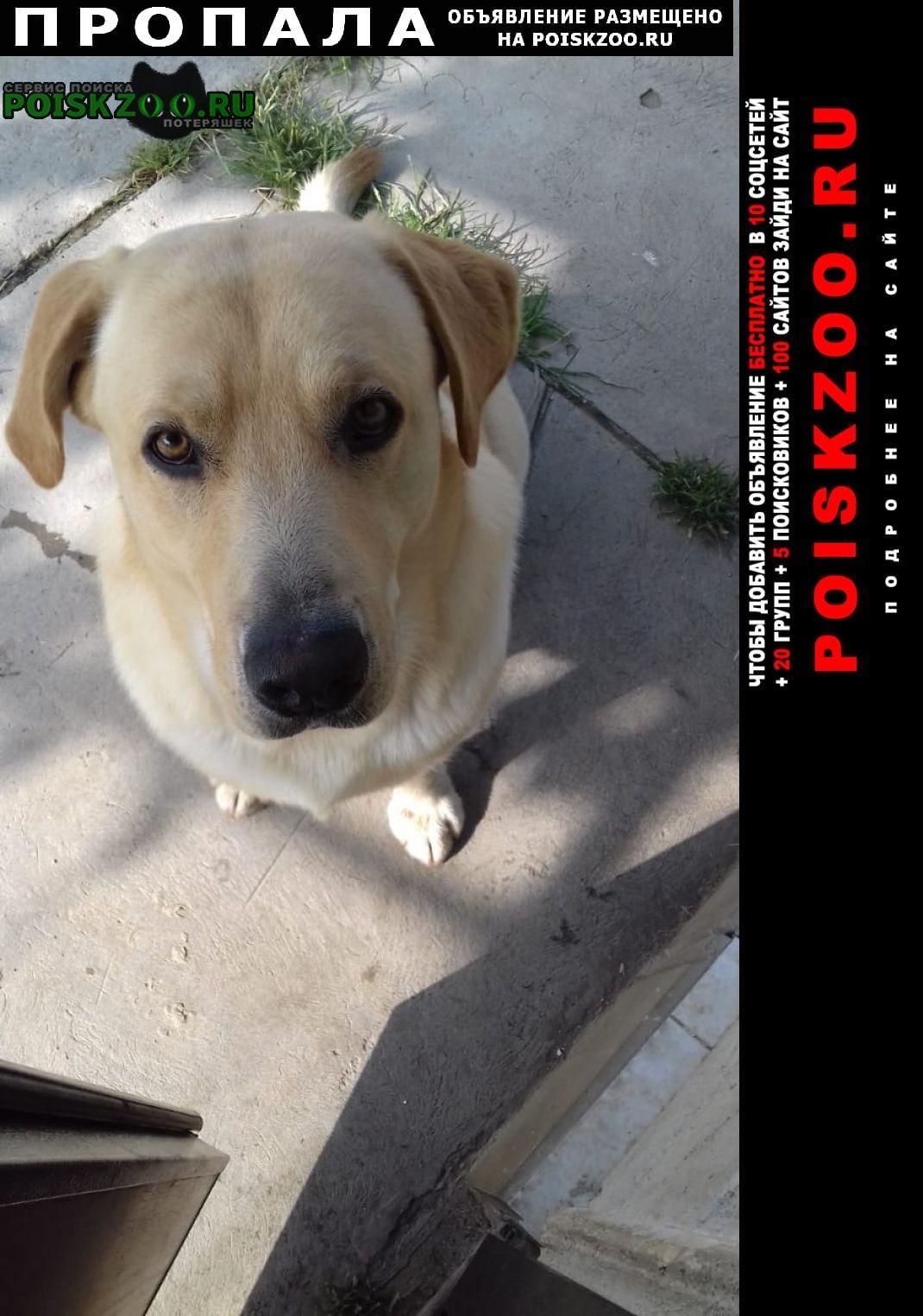 Пропала собака кобель пёс рыже-белого окраса Майкоп (Адыгея)