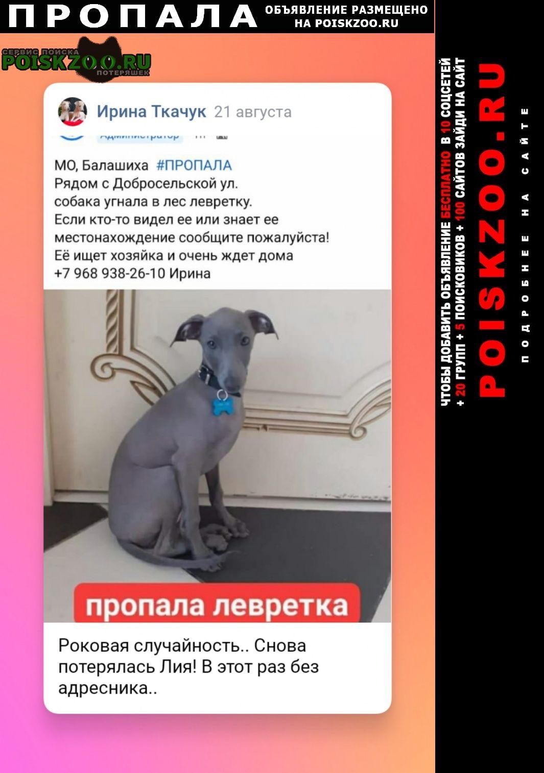 Пропала собака вознаграждение нашедшему Москва