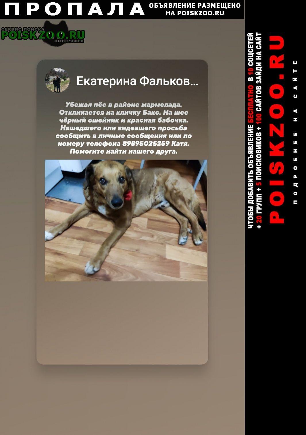 Пропала собака кобель Таганрог