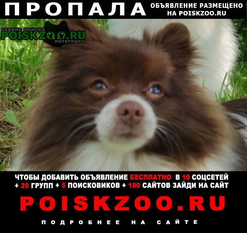 Пропала собака помогите найти Иваново