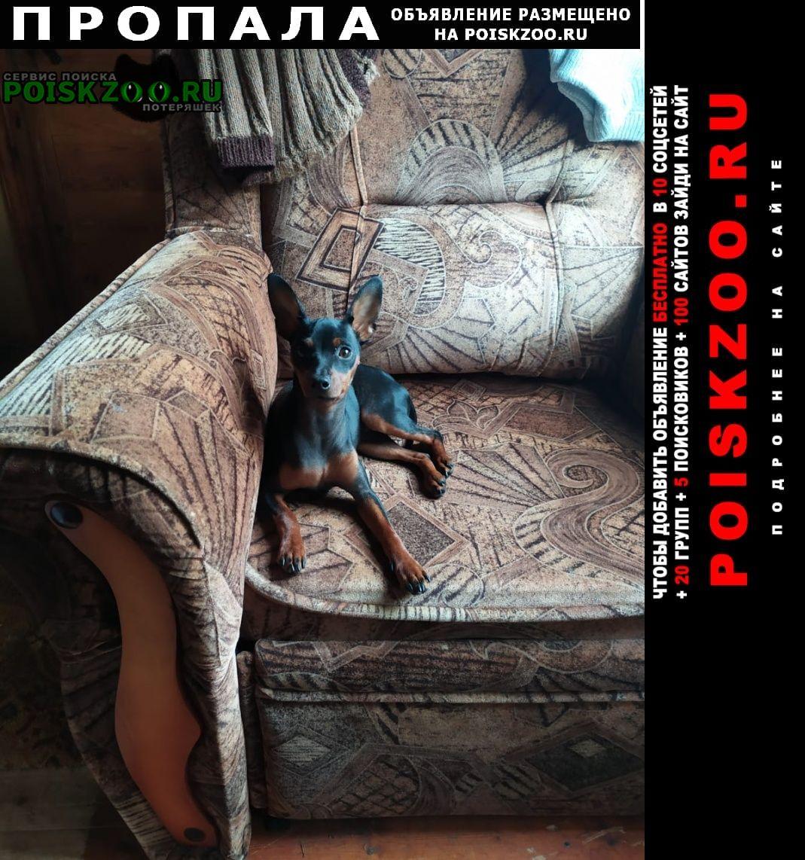 Пропала собака самсыкино, кобылино, кашурино, озёрный Малоярославец