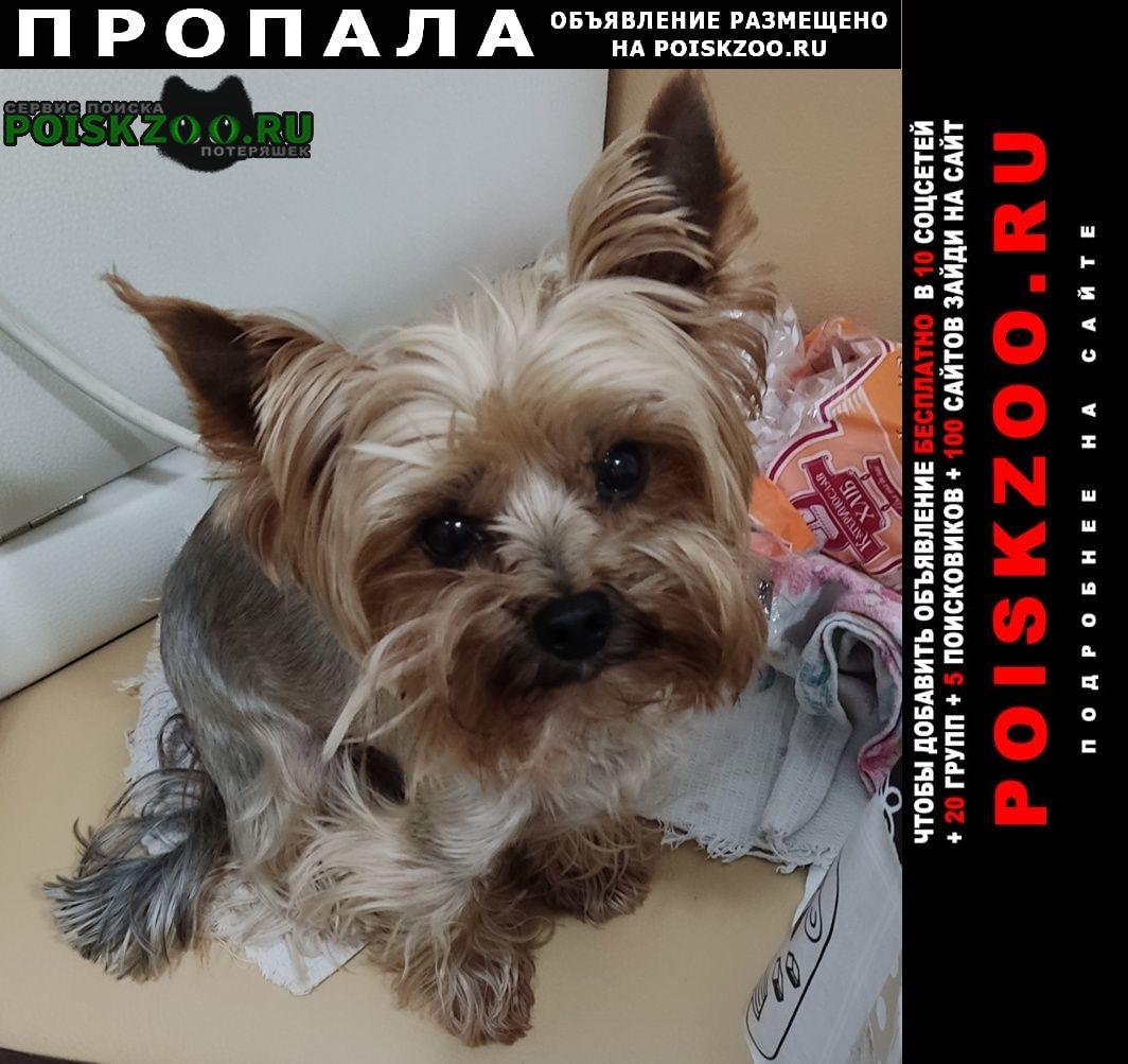 Пропала собака кобель помогите найти собаку Днепропетровск