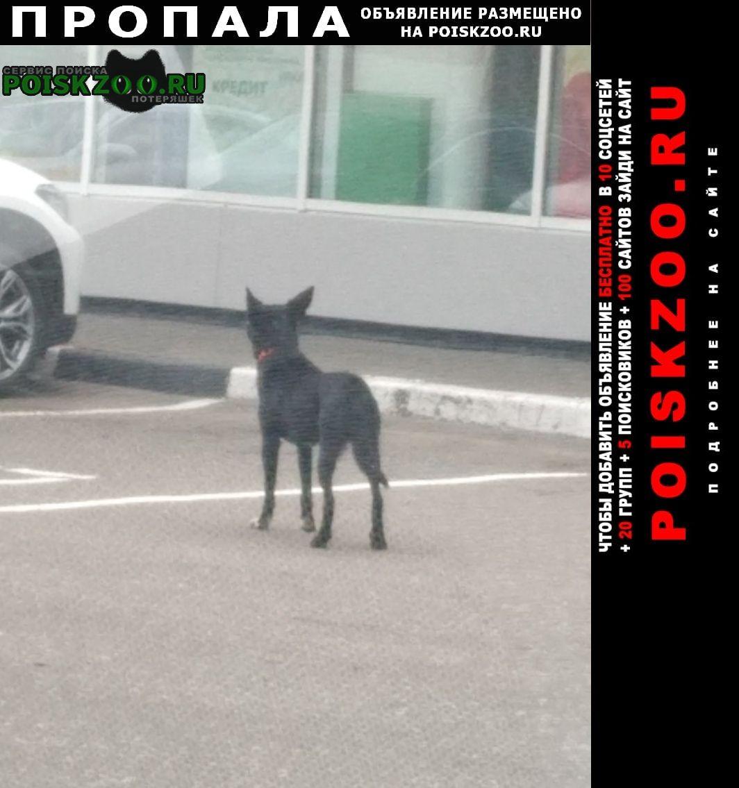 Пропала собака кобель потерялась собака. Видное