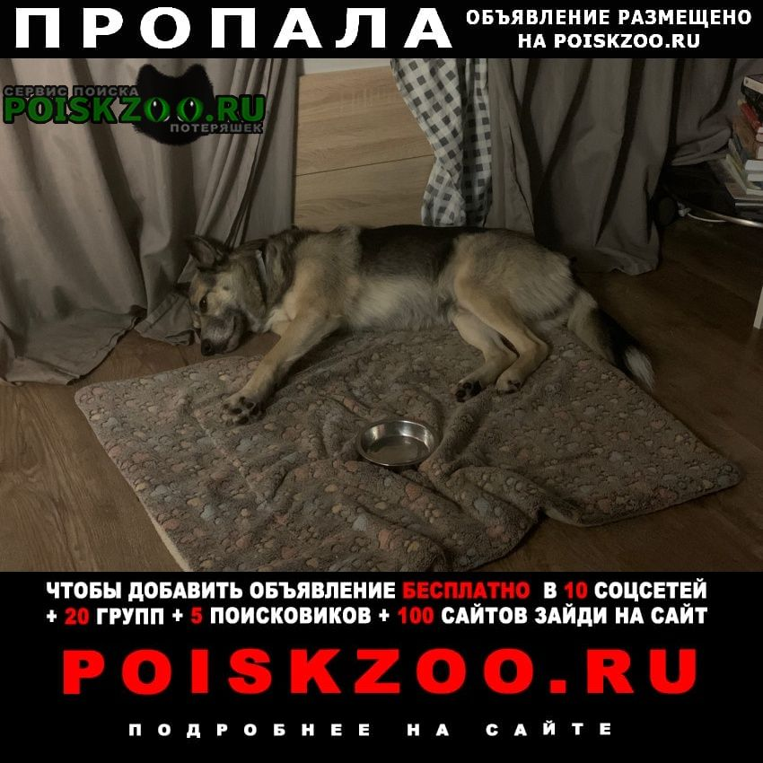 Пропала собака кобель снт новая искра. Электросталь