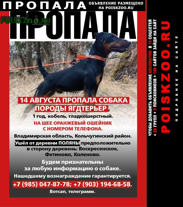 Пропала собака кобель порода ягдтерьер Кольчугино