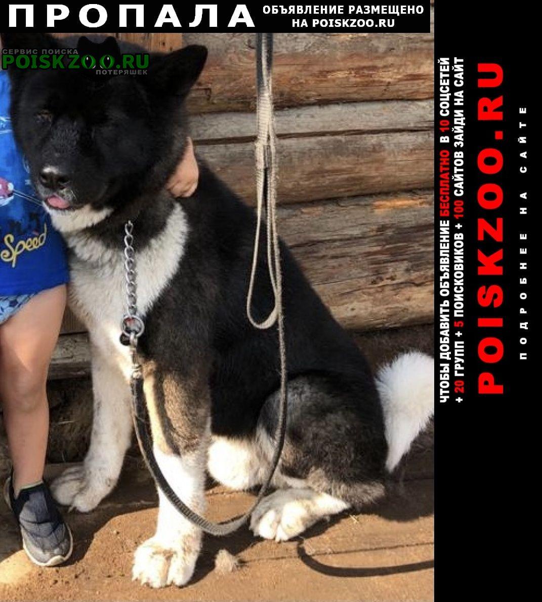 Пропала собака Среднеуральск