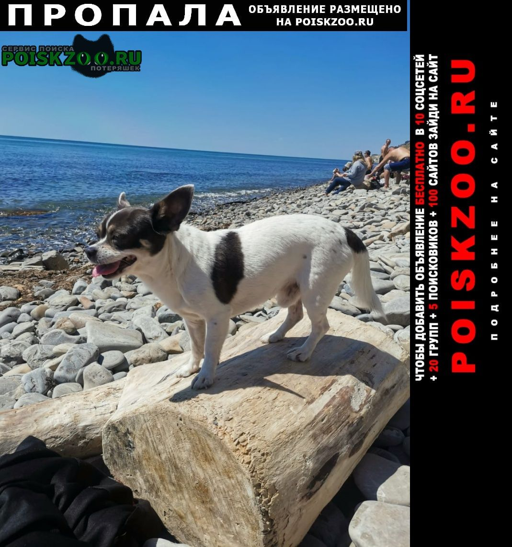 Пропала собака кобель Анапа