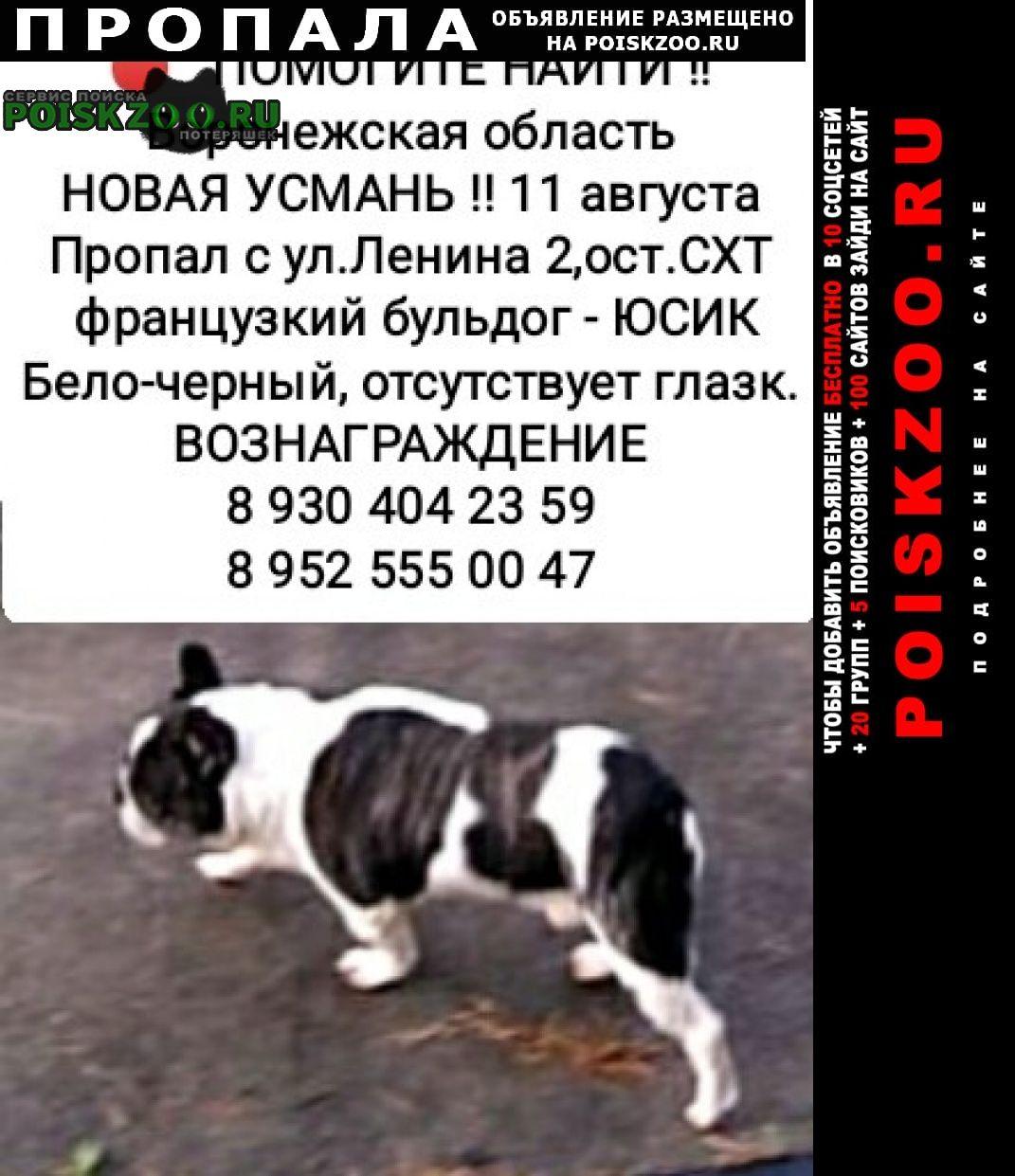 Пропала собака кобель потеряшка Новая Усмань