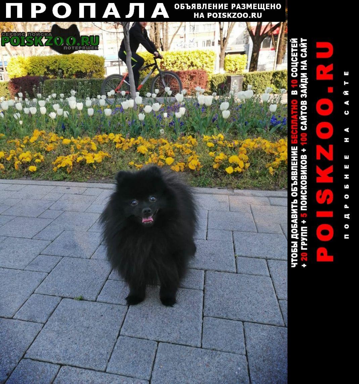 Пропала собака кобель чёрный шпиц Краснодар