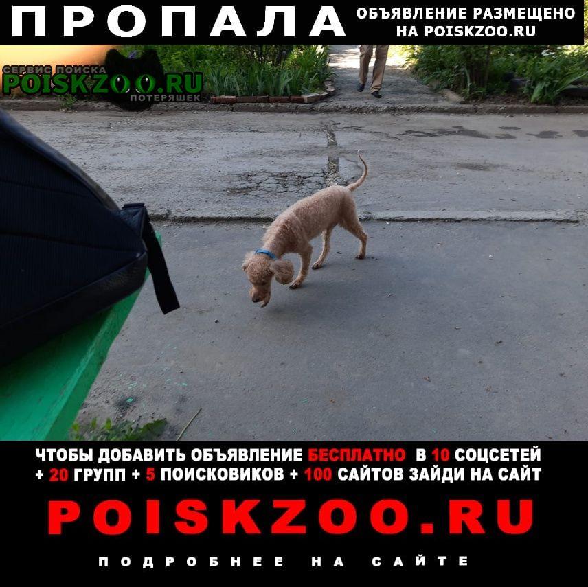 Пропала собака Красный Сулин