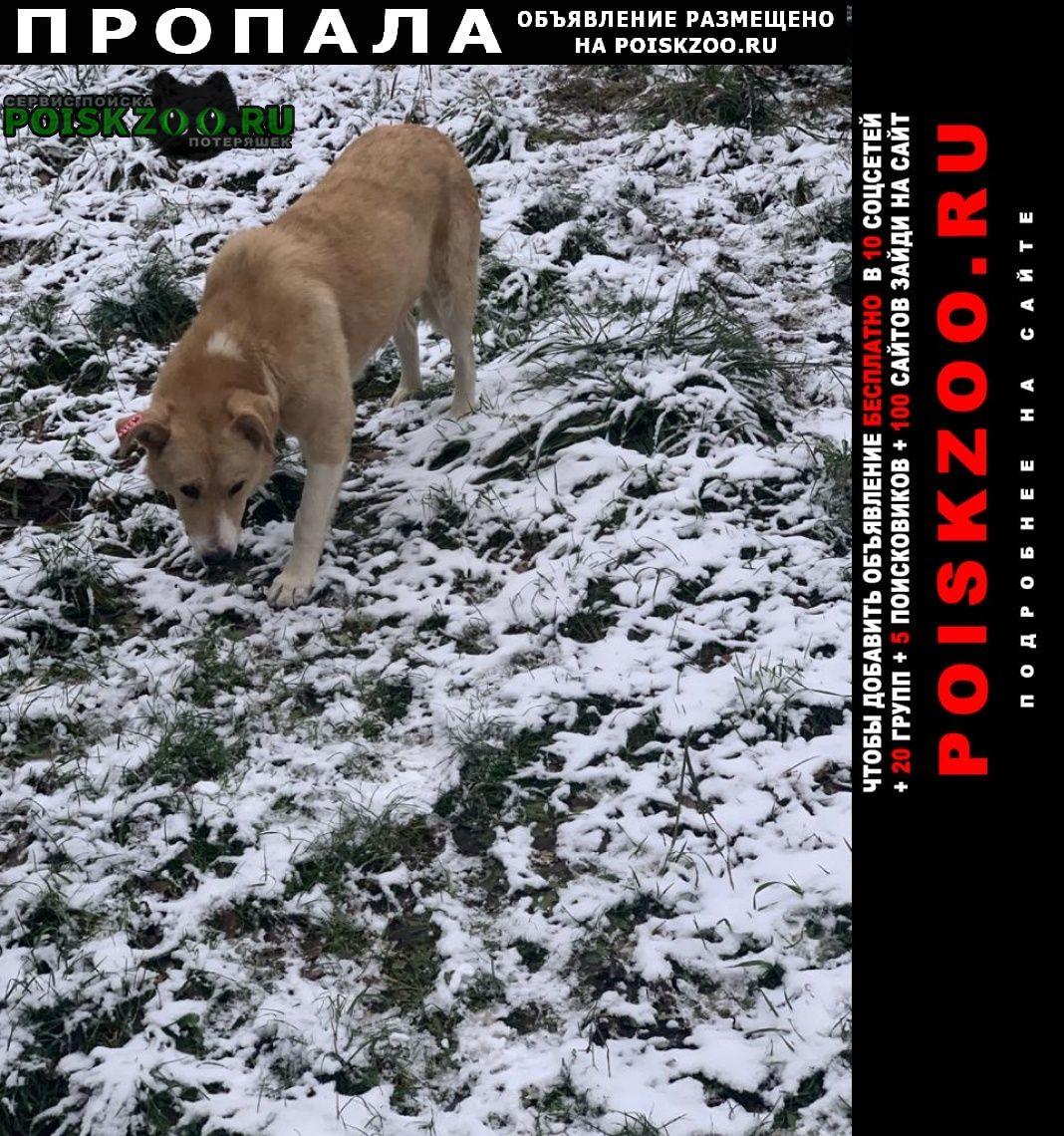 Пропала собака кобель помогите найти Бронницы