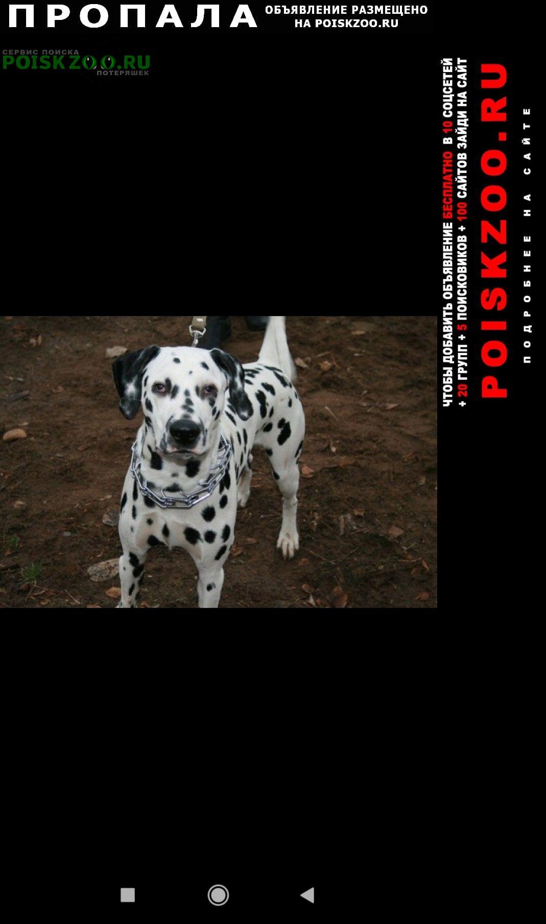 Пропала собака кобель далматин мальчик. Пермь