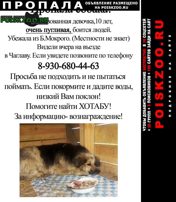 Кстово Пропала собака