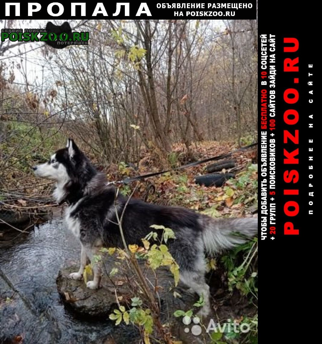 Чебоксары Пропала собака кобель пес хаски ресси