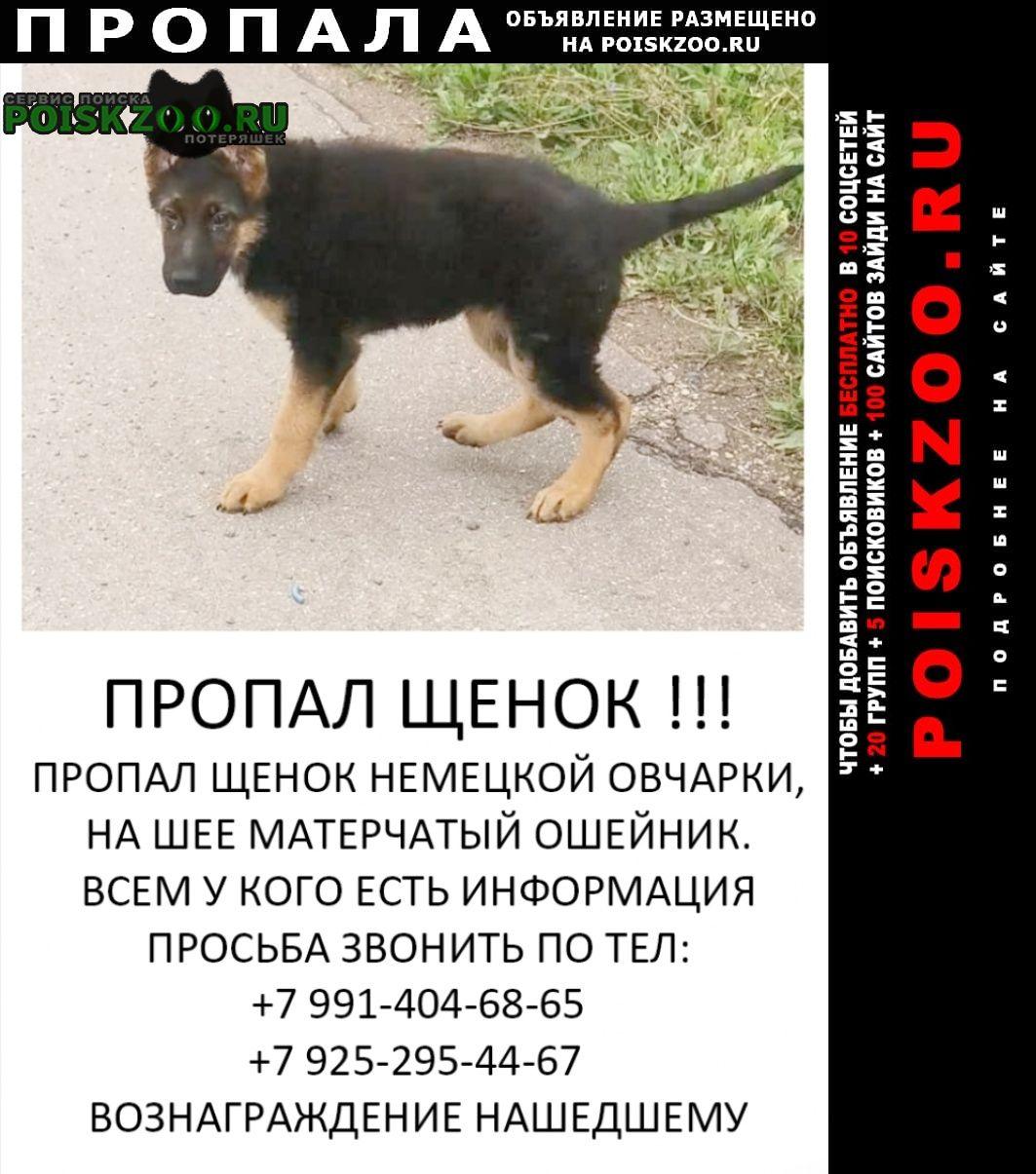 Пропала собака кобель щенок немецкой овчарки Лобня