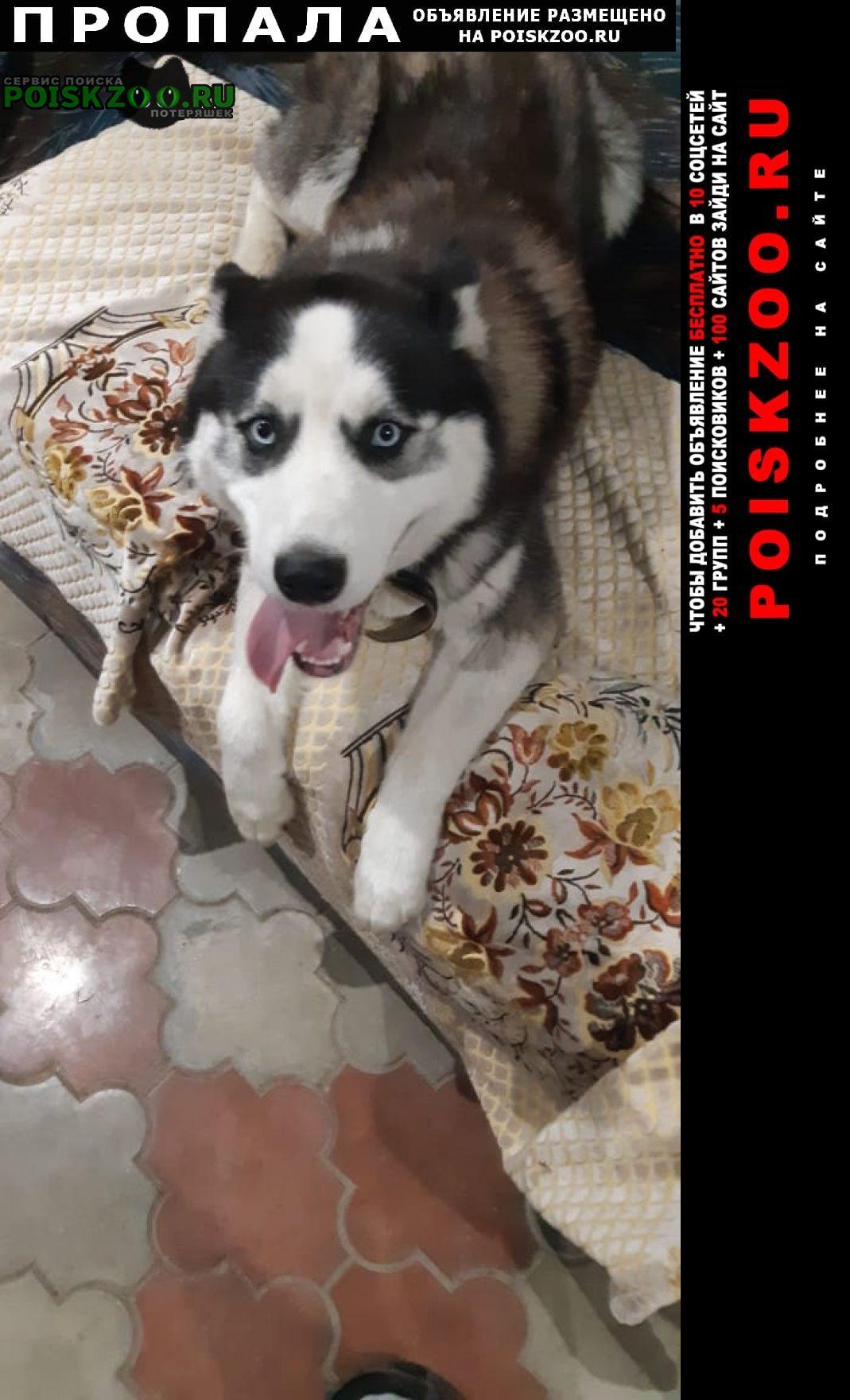 Пропала собака кобель Нальчик