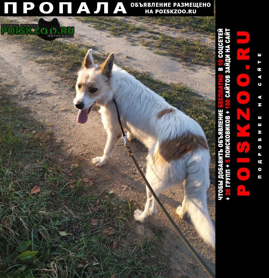Лакинск Пропала собака кобель пёс 24 августа, г.