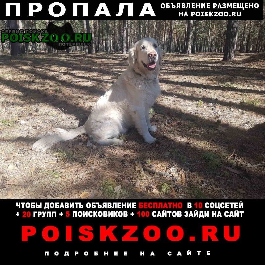 Тюмень Пропала собака кобель
