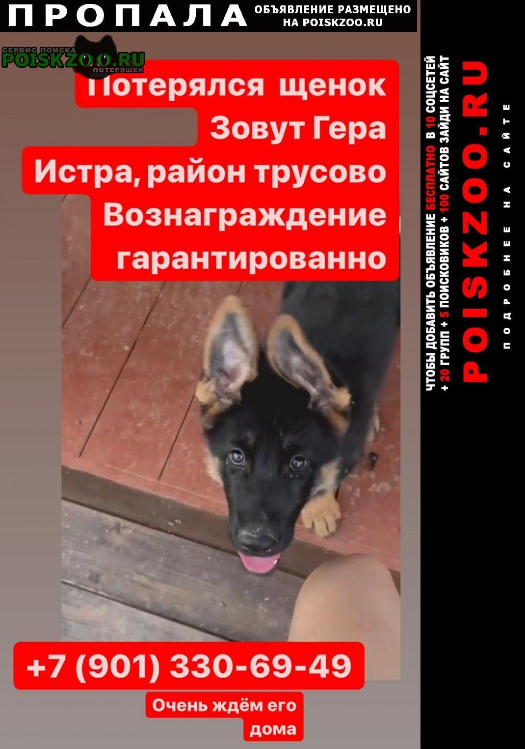 Пропала собака щенок Истра