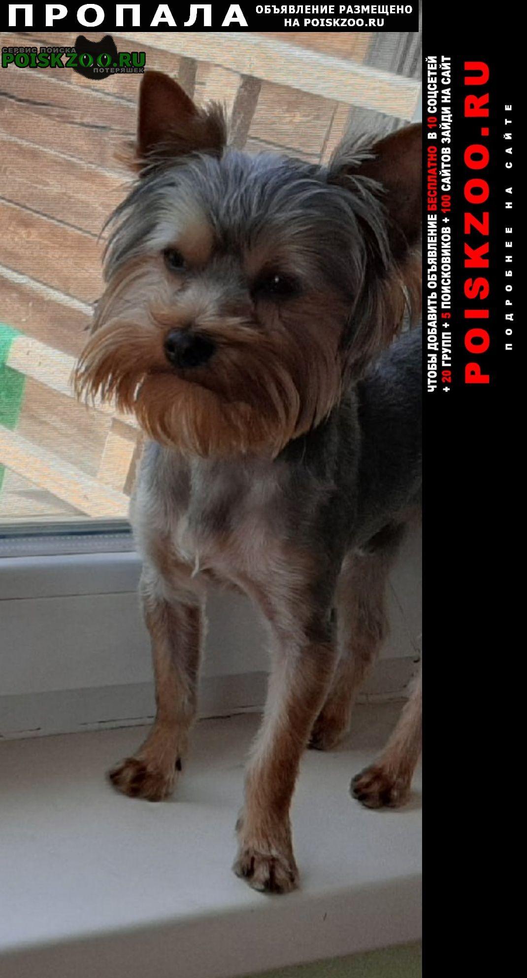 Пропала собака кобель Улан-Удэ
