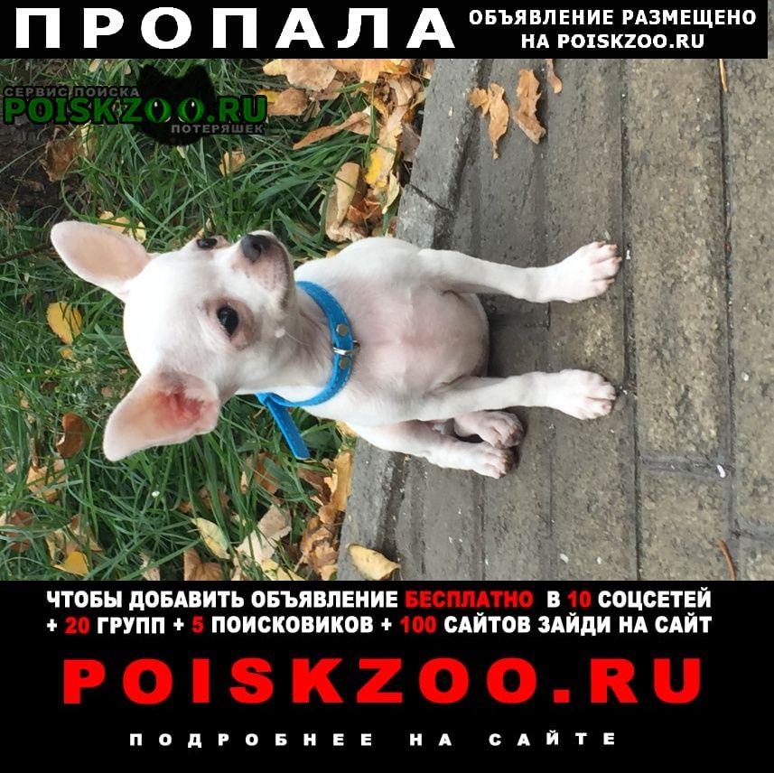 Копейск Пропала собака кобель