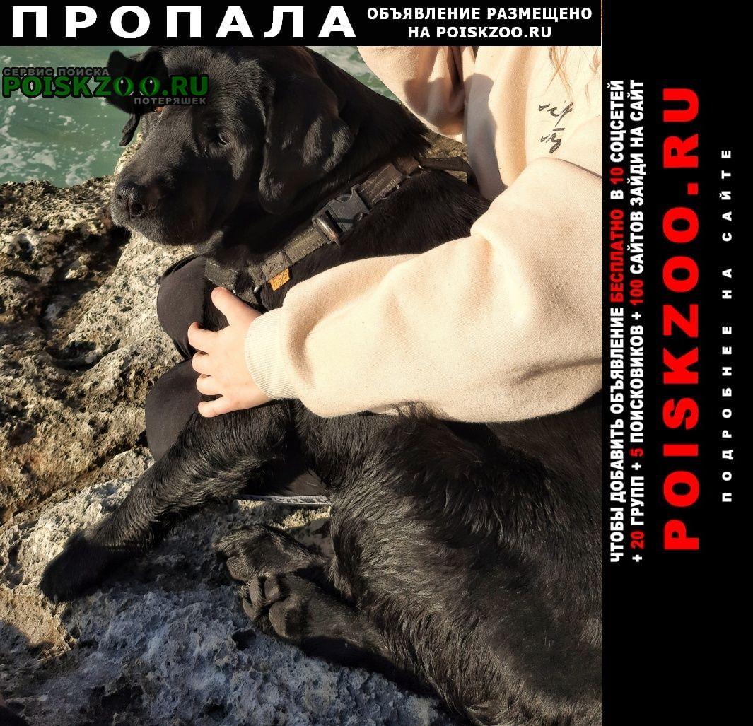 Севастополь Пропала собака 25 августа