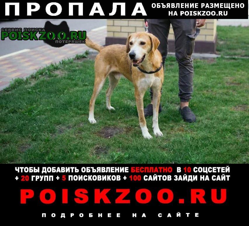 Москва Пропала собака помогите