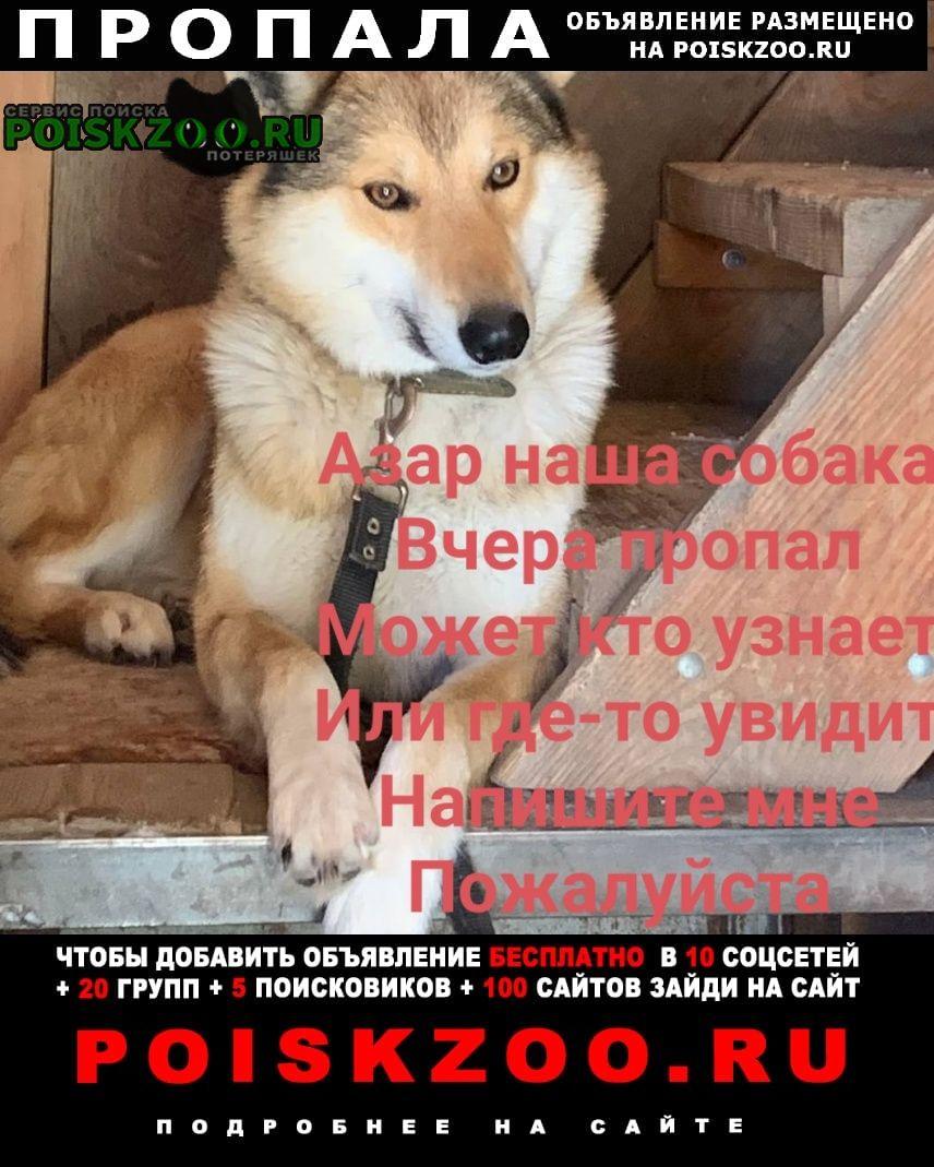 Пропала собака кобель. Томск