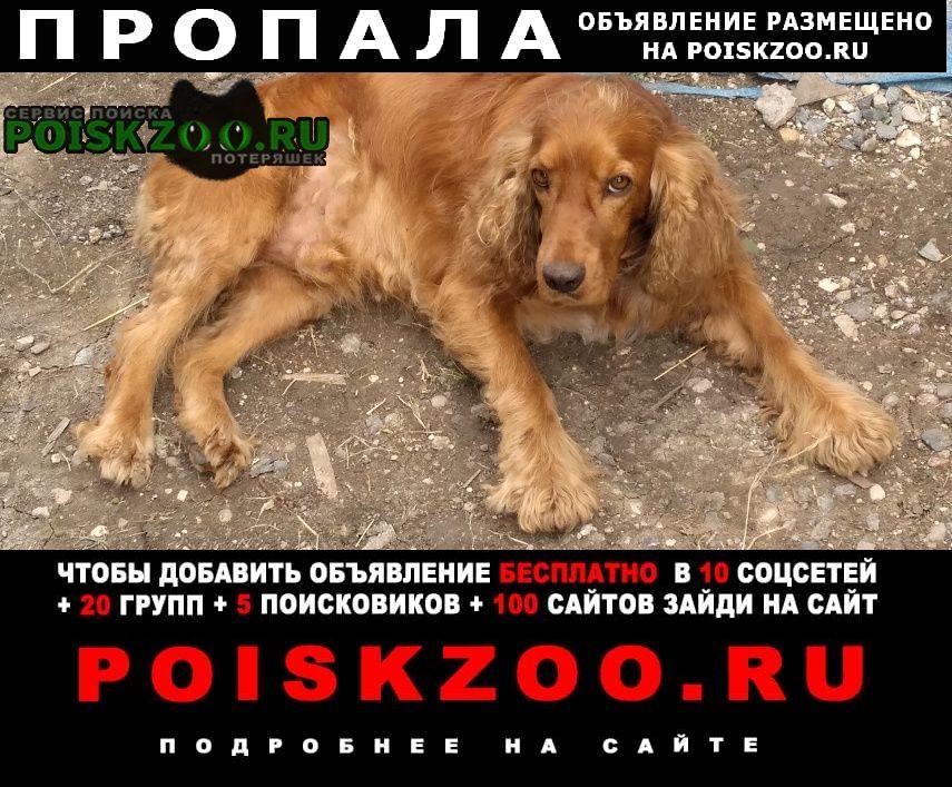 Ессентуки Пропала собака кобель ушёл