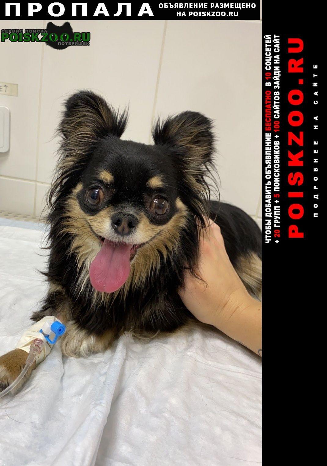 Подольск Пропала собака кобель нужна ваша помощь