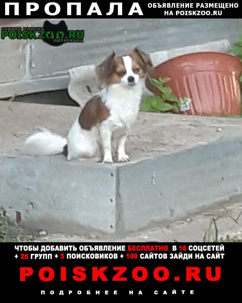 Пушкино Пропала собака на парковке тц глобус моск.обл.