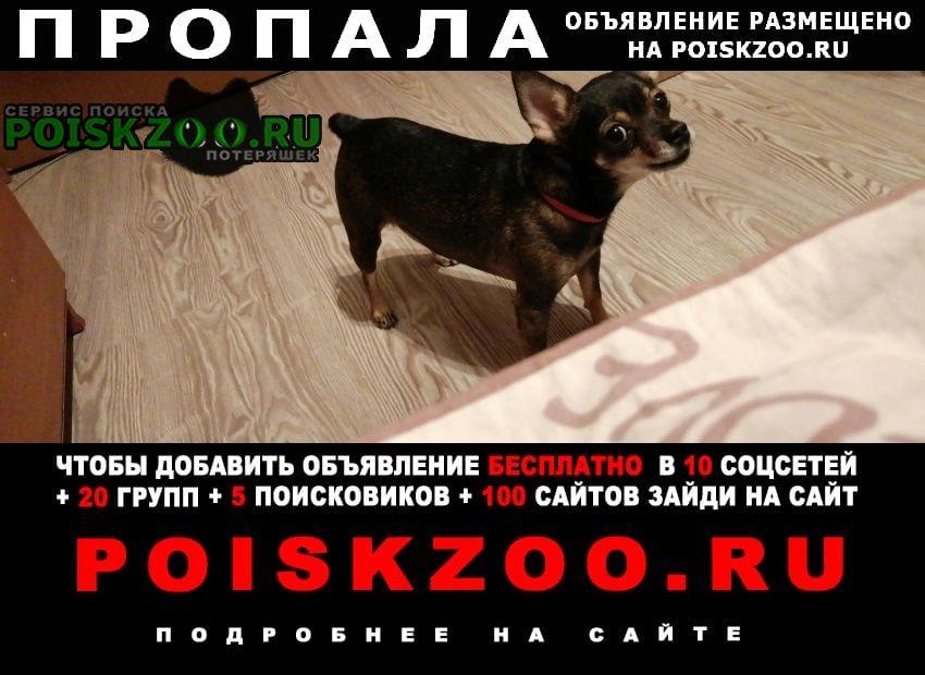 Хабаровск Пропала собака