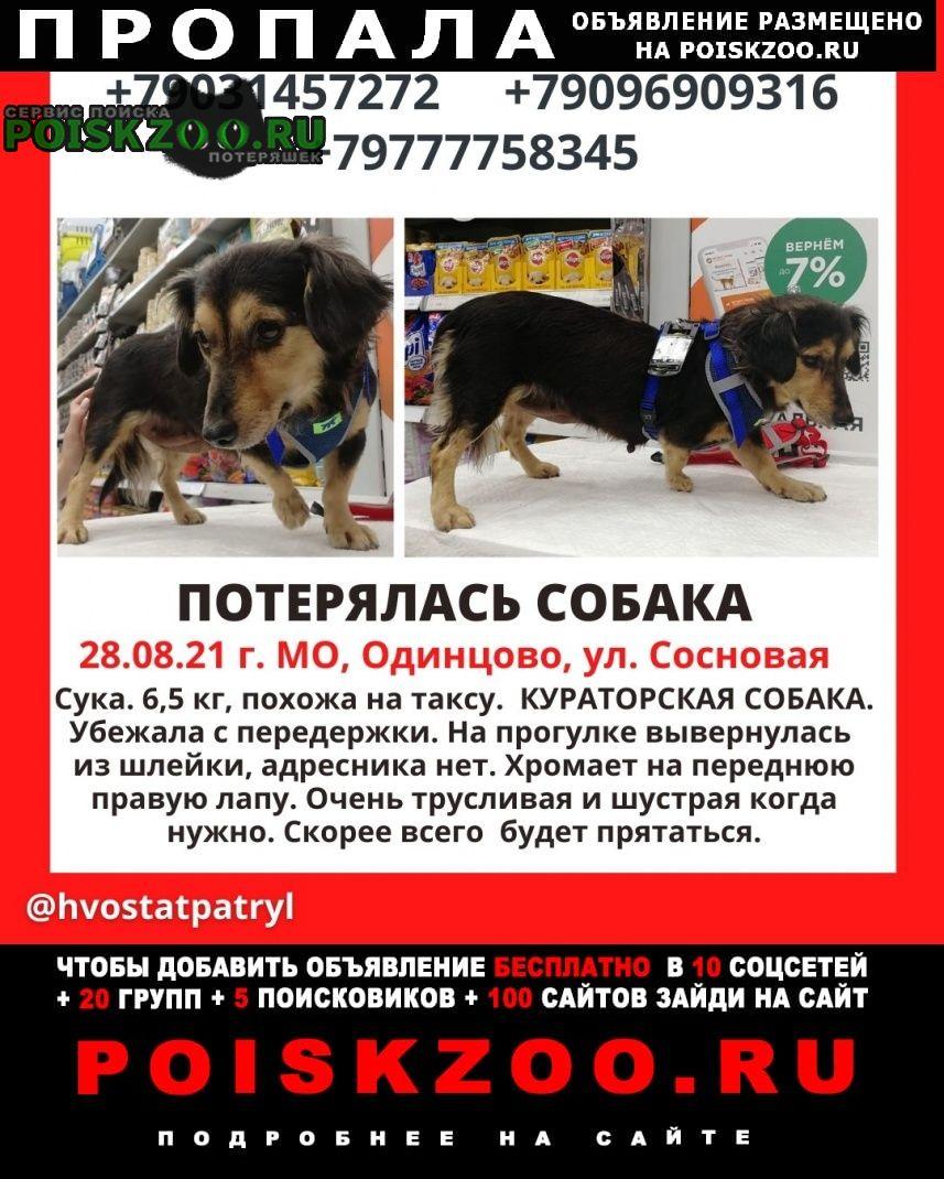 Пропала собака Одинцово