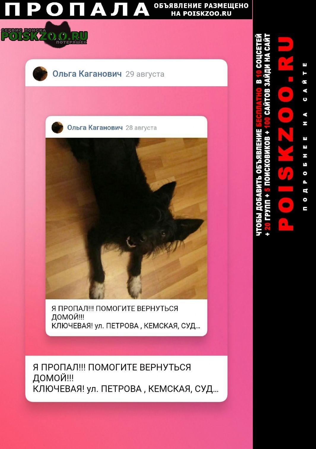 Пропала собака кобель я помогите прийти домой Петрозаводск