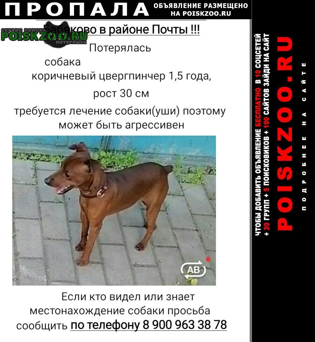 Воронеж Пропала собака кобель вознаграждение