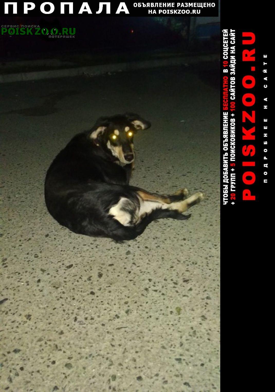 Озерск(Челябинская обл.) Пропала собака