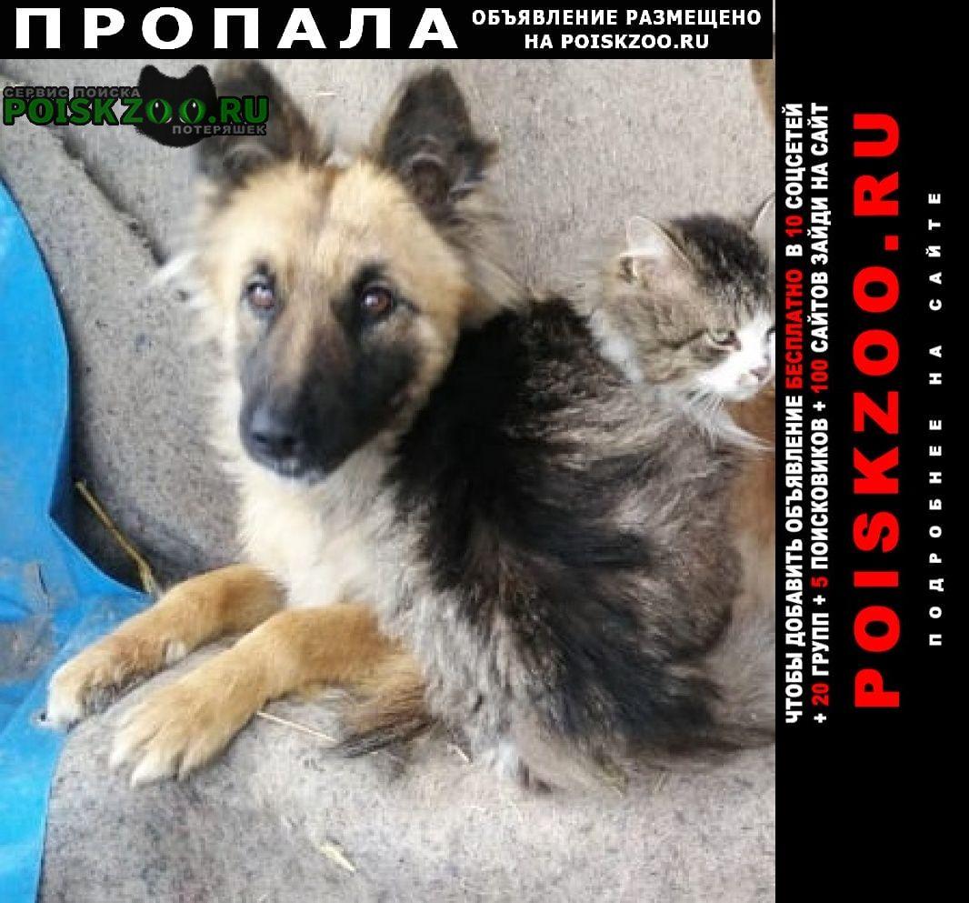 Пропала собака помогите пожалуйста найти Симферополь
