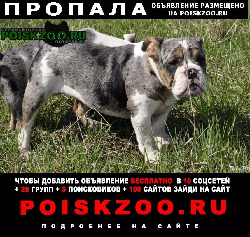 Воронеж Пропала собака