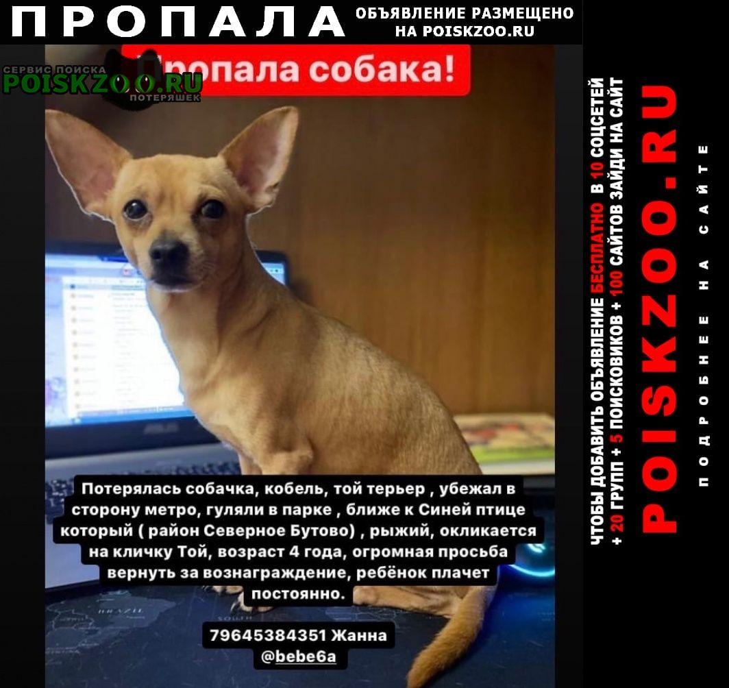 Пропала собака кобель северное бутово Москва