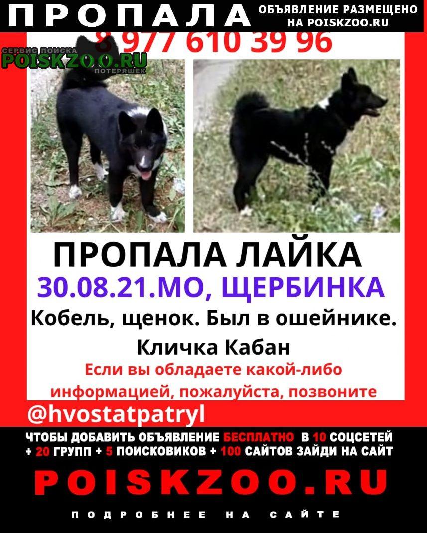 Щербинка Пропала собака кобель кабель, порода лайка, кабан