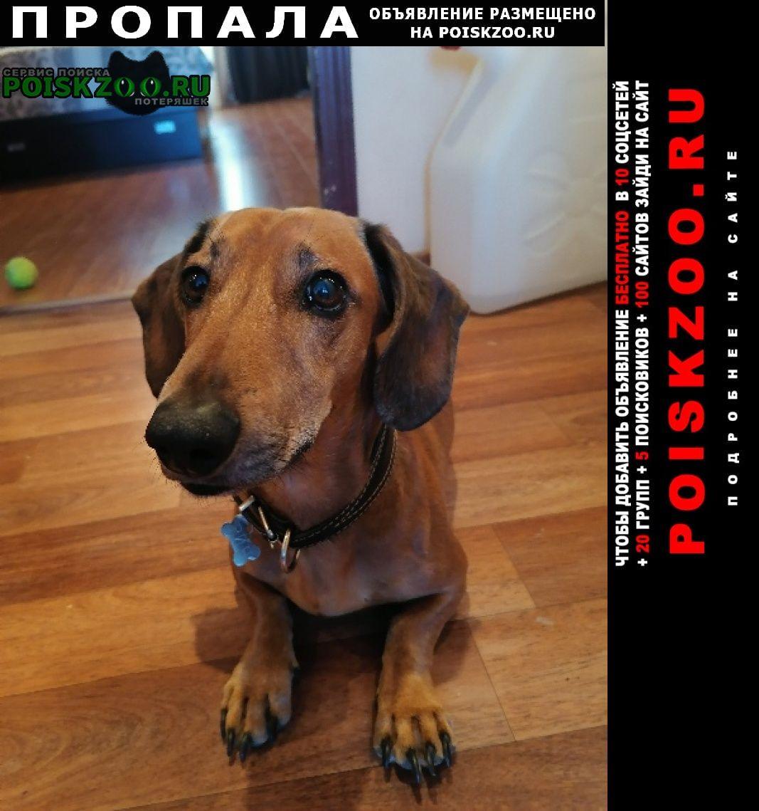 Пропала собака кобель вознаграждение 20.000 Магадан