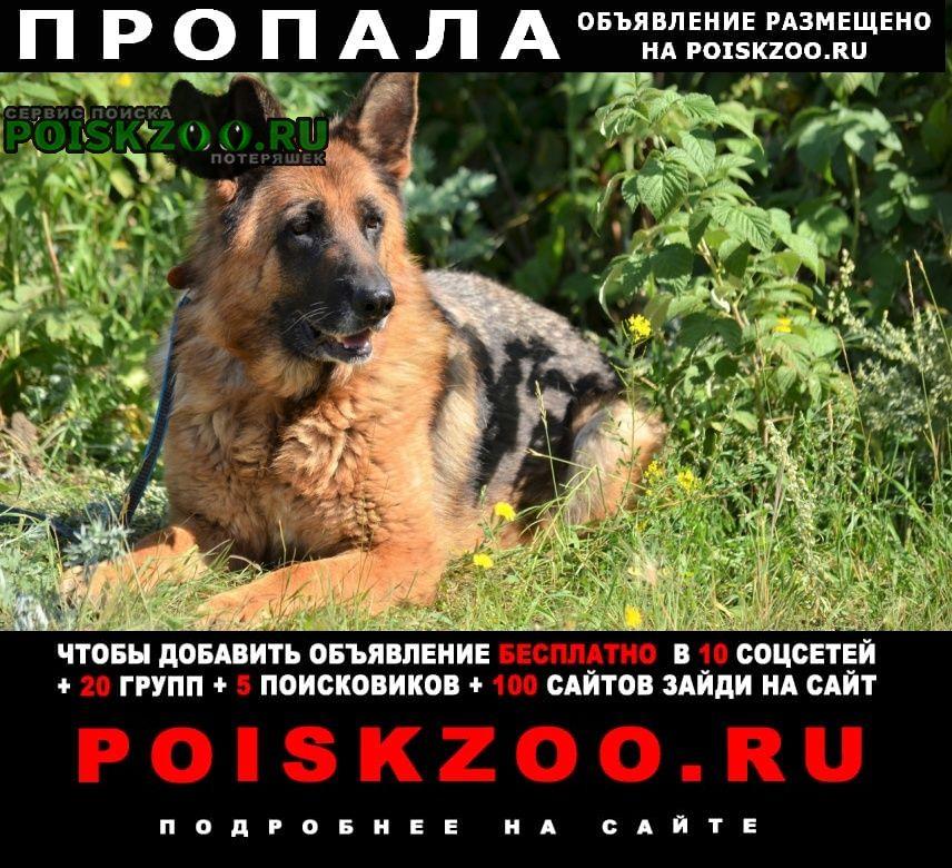 Пропала собака Полевской