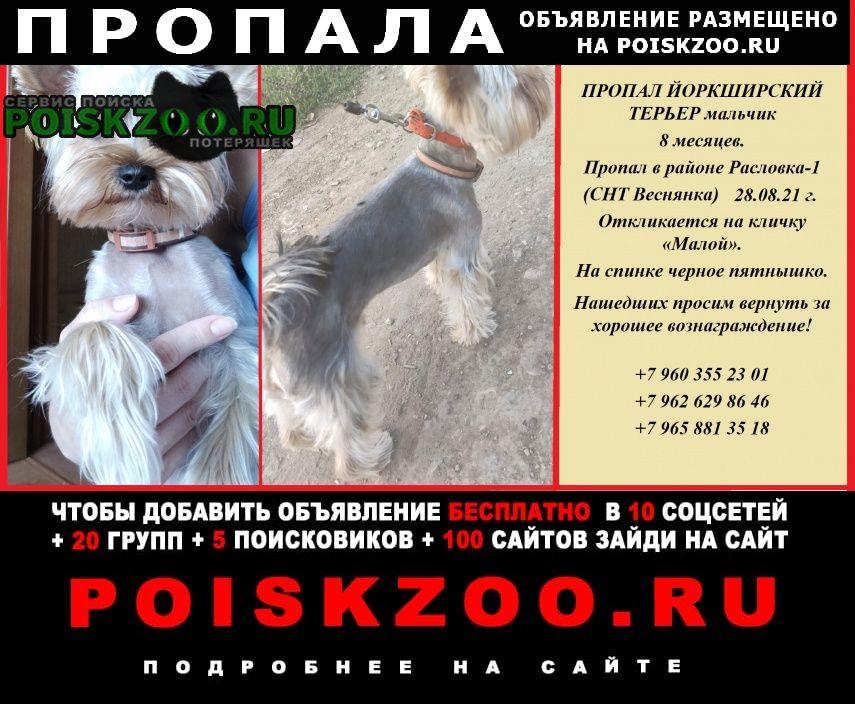 Пропала собака кобель йоркширский терьер Саратов