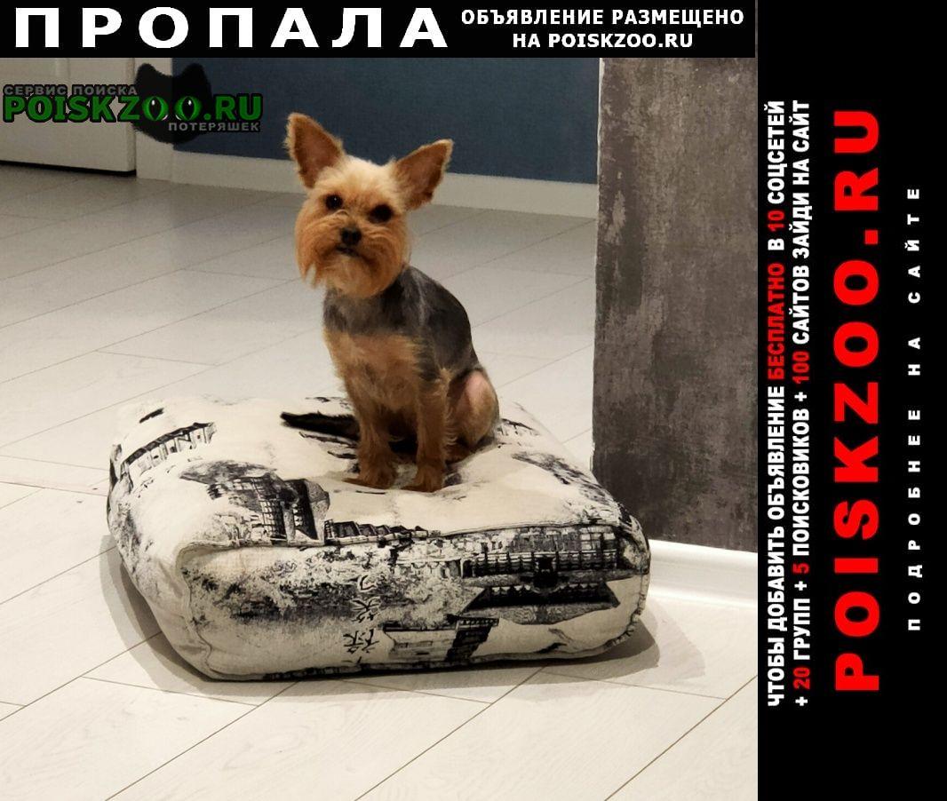 Волгоград Пропала собака