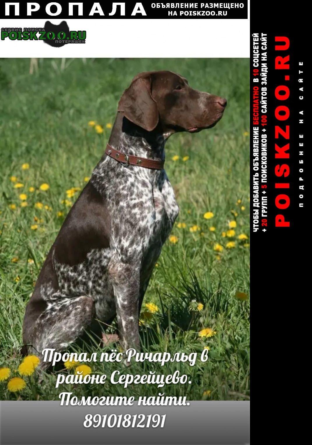Пропала собака кобель Ковров