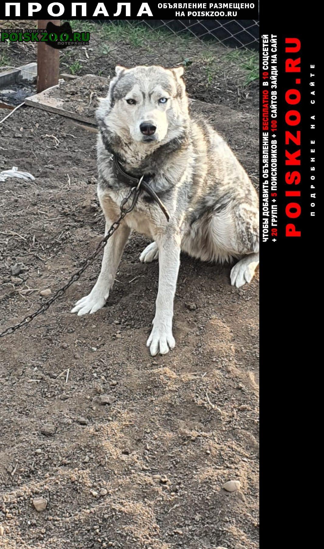 Пропала собака кобель Кемерово