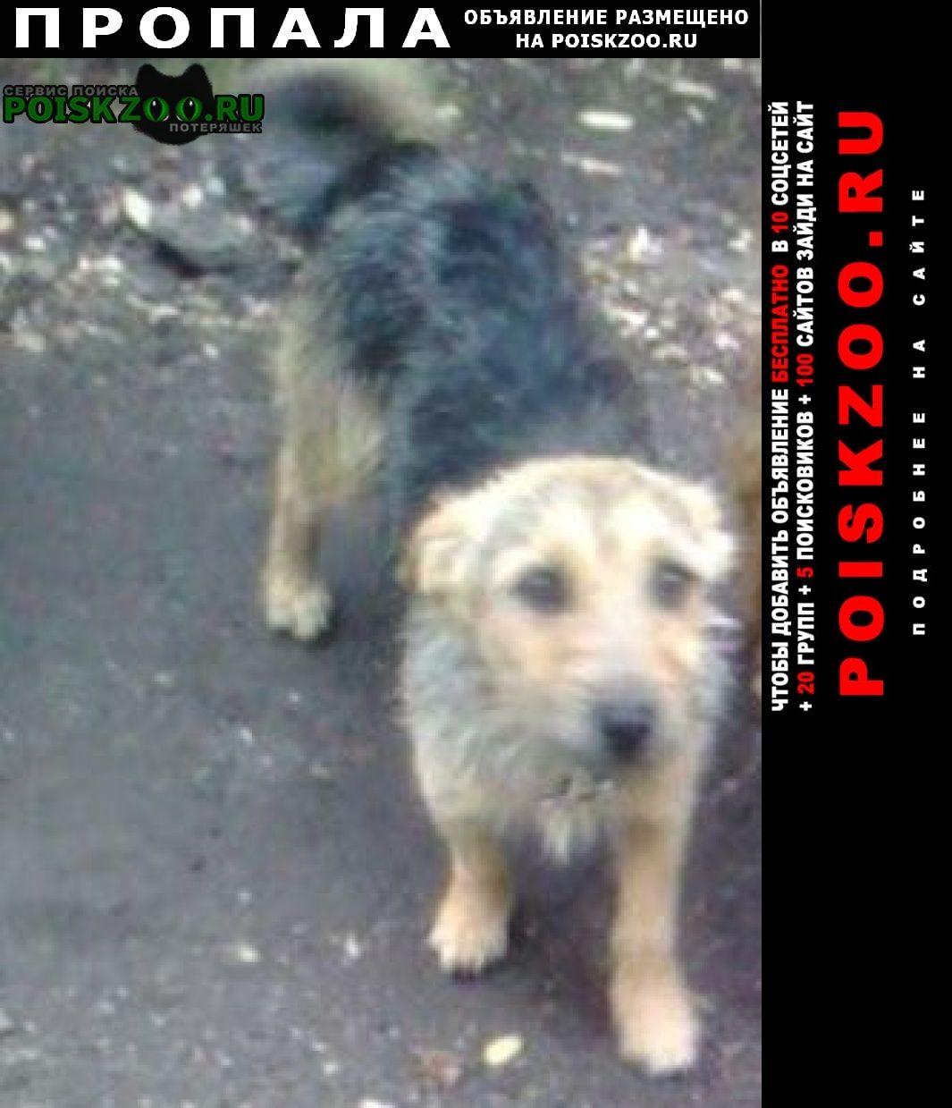 Пропала собака помогите найти собаку Севастополь
