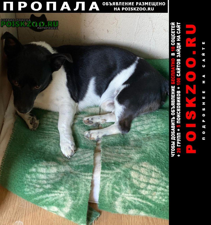 Калининград (Кенигсберг) Пропала собака кобель в районе а. голубево