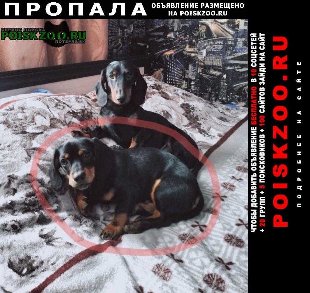 Пропала собака Дятьково Брянская обл.