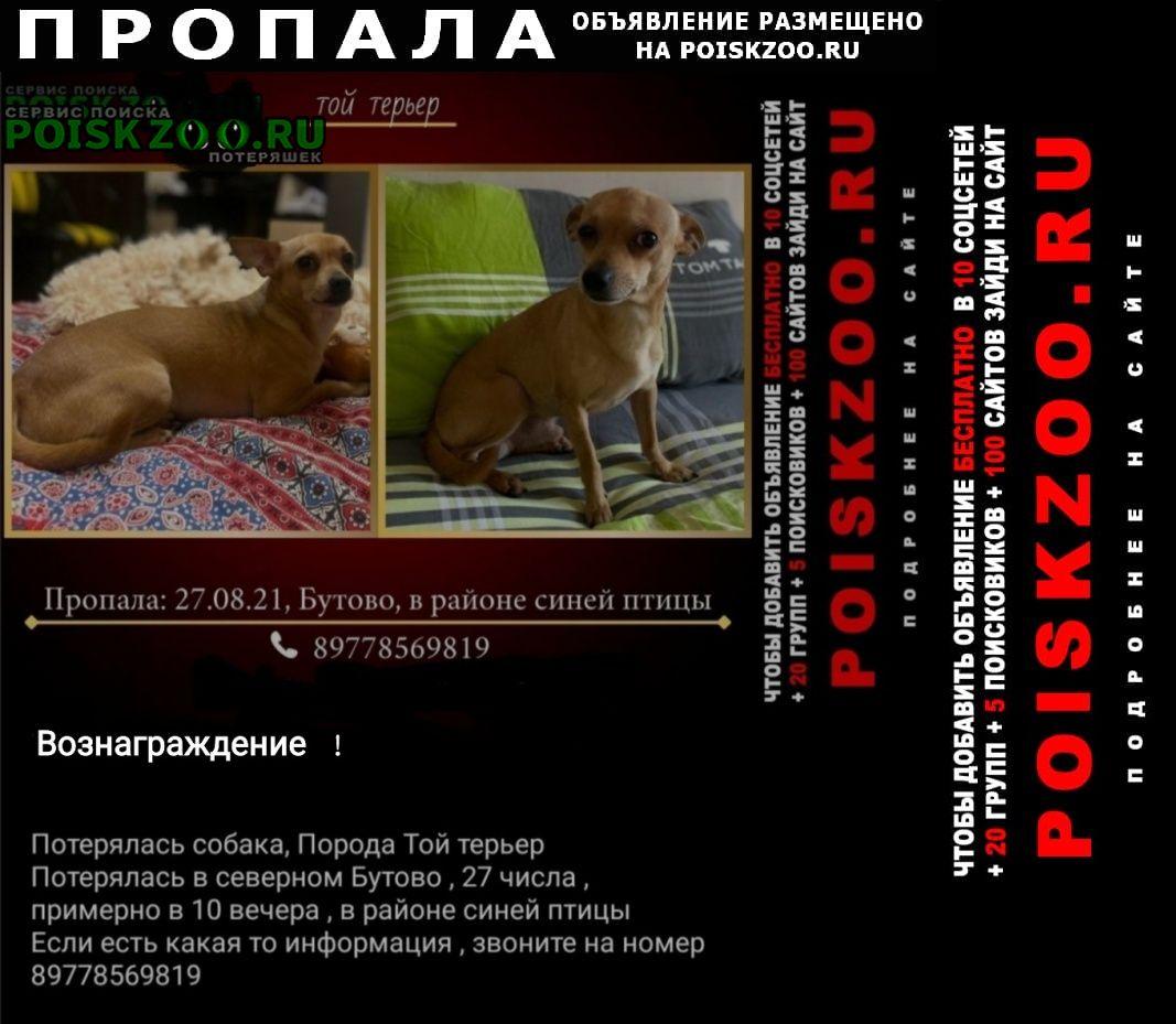 Москва Пропала собака кобель той терьер